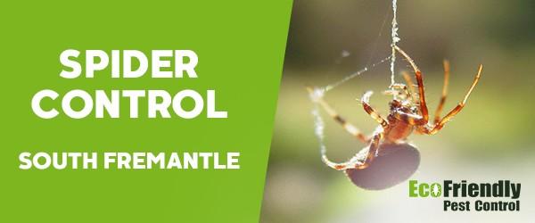 Spider Control  South Fremantle
