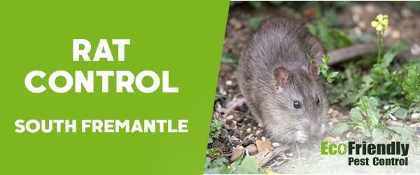 Rat Pest Control  South Fremantle