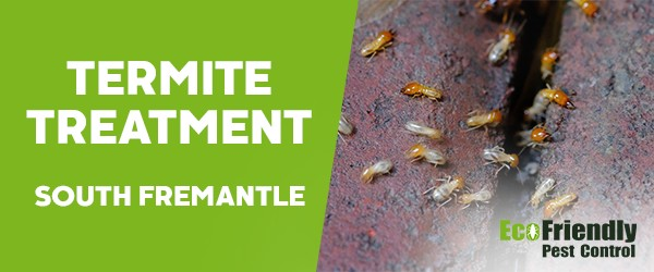 Termite Control  South Fremantle