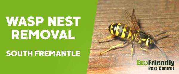 Wasp Nest Remvoal  South Fremantle
