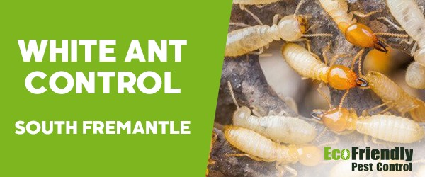 White Ant Control  South Fremantle