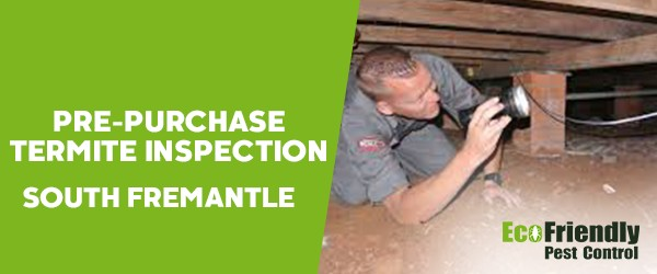 Pre-purchase Termite Inspection  South Fremantle