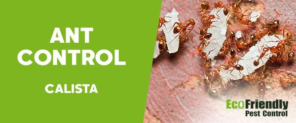 Ant Control Calista