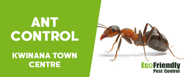 Ant Control Kwinana Town Centre