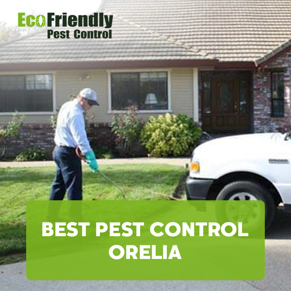Best Pest Control Orelia