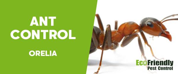 Ant Control Orelia