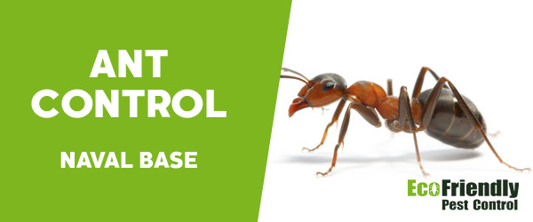 Ant Control Naval Base